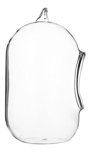 jarrón de vidrio colgante terrario suculentas plantas paisaj