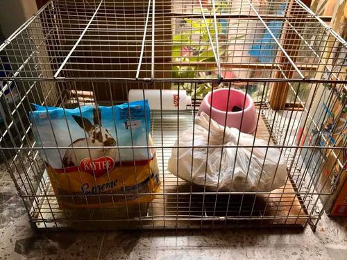 jaula con conejo