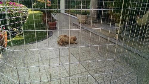 jaula corral para perro 1.2mt alto 8 paneles dog play pen