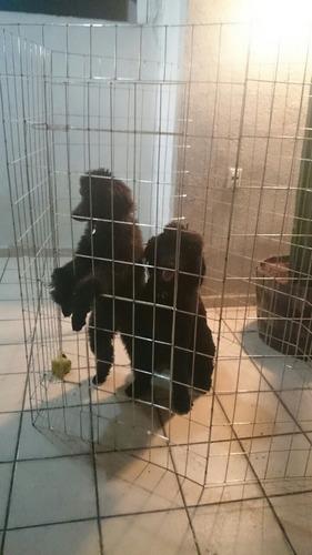 jaula corral para perros de 75cm de altura 6 paneles