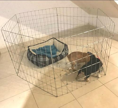 jaula corral perro 60cm d alto 6 paneles economico