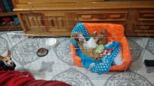 jaula corral perro 60cm de alto 6 paneles razas miniatura