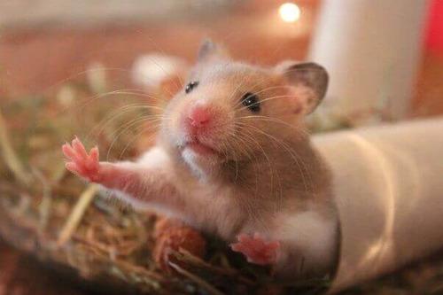 jaula hamster rata erizo san diego redkite dy415b c/envío