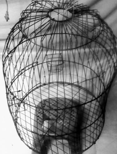 jaula lora