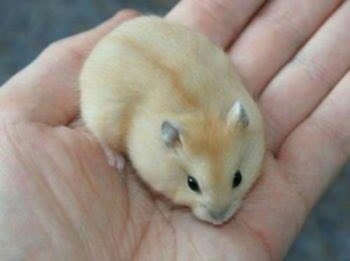 jaulita + hamster