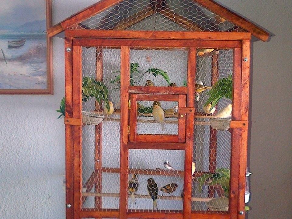 Aclimatación de pájaros - Jaulas para pajaros