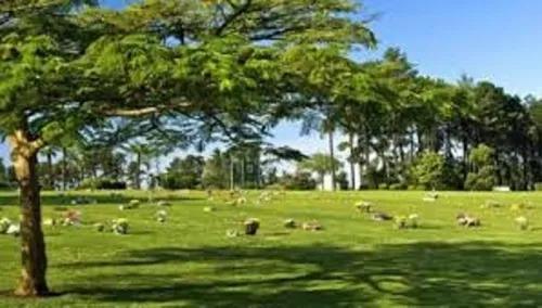 jazigo perpetuo parque dos pinheiros - ao lado da sede.