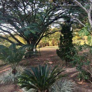 jazigo túmulo parque flamboyant campinas
