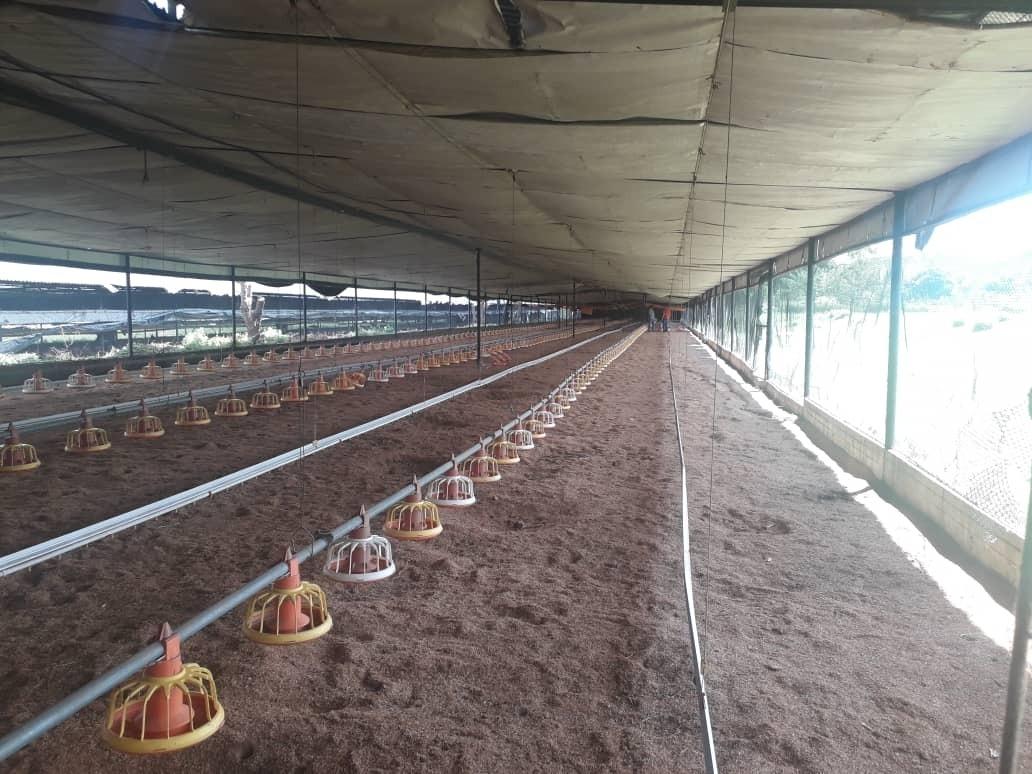 jc vende granja pollos tinaquillo 415111
