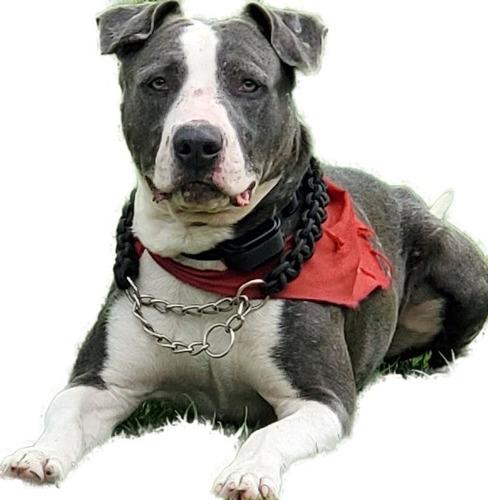 jm guardería canina