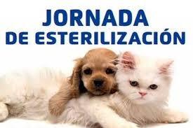 jornada de esterilizacion canina y felina desde $ 50000