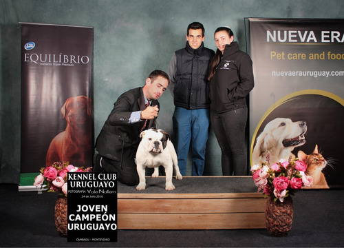 joven campeón uruguayo para inseminacion. placa de cadera a