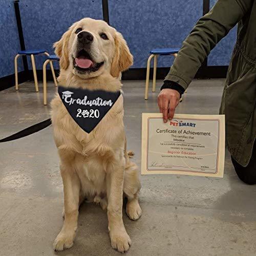 jpb bandana de graduacion de perro