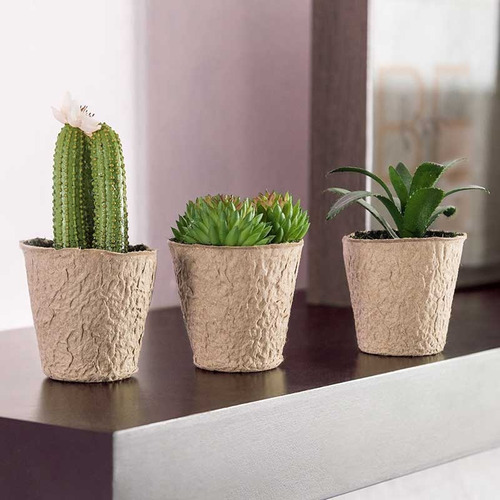 juego de 3 plantitas artificiales flor de cactus biasi