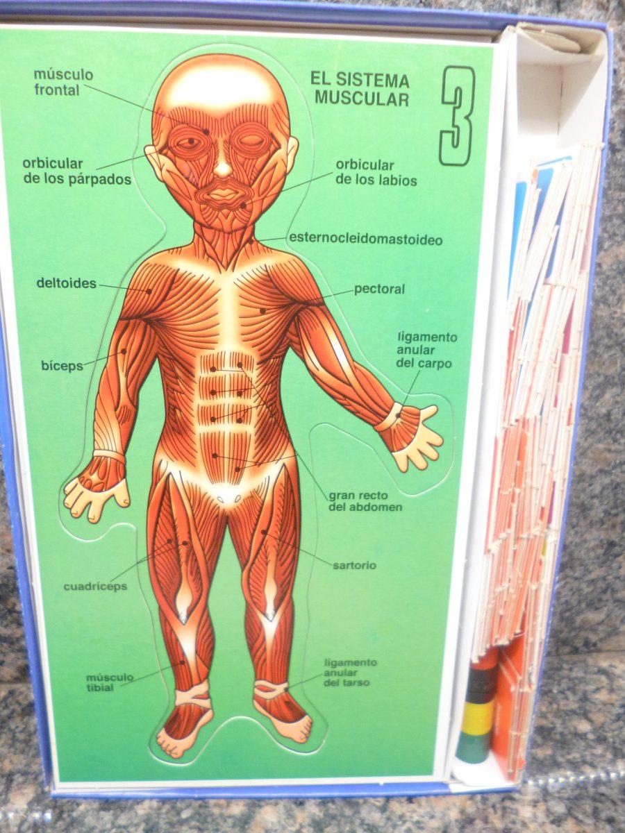 Juego De Anatomia... Como Es Mi Cuerpo - Bs. 454,99 en Mercado Libre
