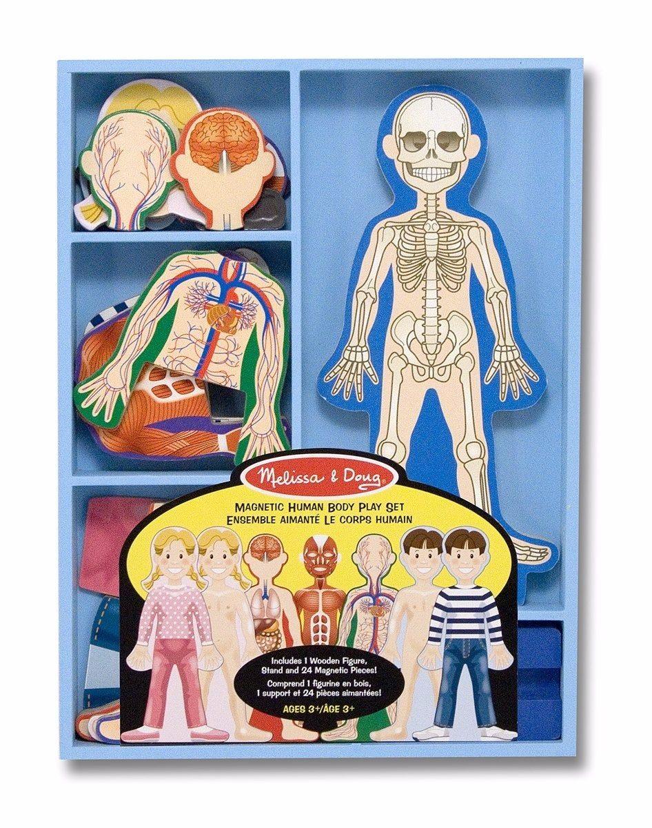 Juego De Anatomía De Cuerpo Humano Magnético Con 24 Piezas ...