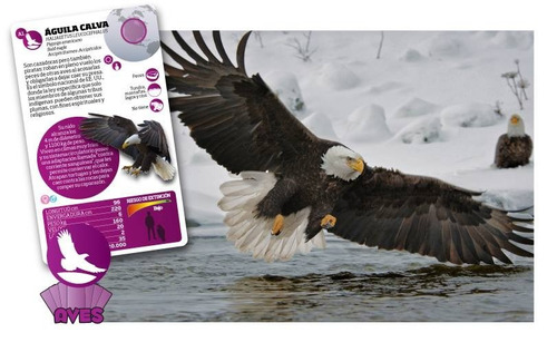 juego enciclopédico luminias 32 cartas mundo de las aves