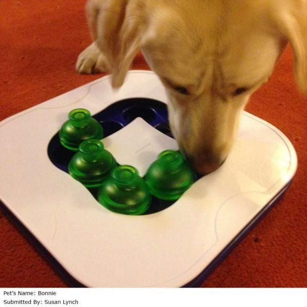 Juego Interactivo Para Perros Mind Games Dog It Envio Grat