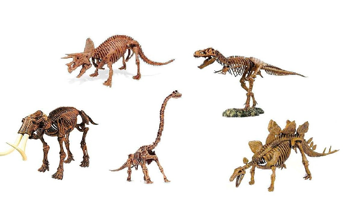 Juego Kit Esqueleto Dinosaurio Para Encastrar Varios Modelos - $ 237 ...