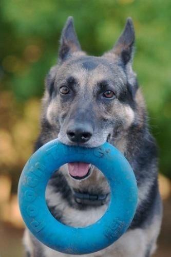 juguete interactivo para perros: pooch tube