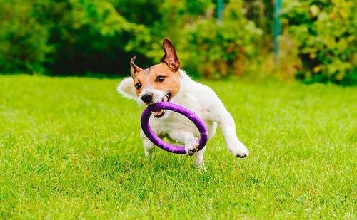 juguete jebe varios mascota perros pack4 engrielo l i m a