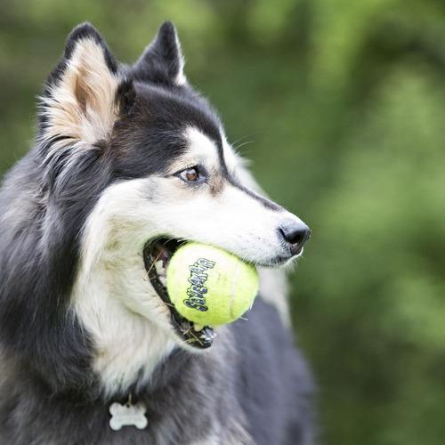juguete pelota para perro kong squeakair talla m