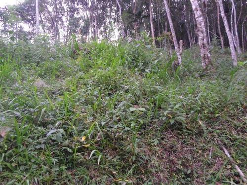 juquitiba - terreno bosqueado- mata-ref: 03933