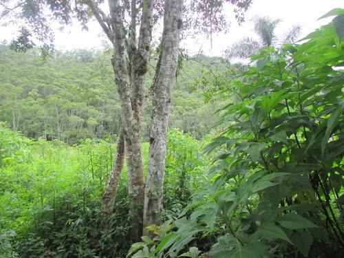 juquitiba - terreno/semi plano/riacho/nascente ref: 04239