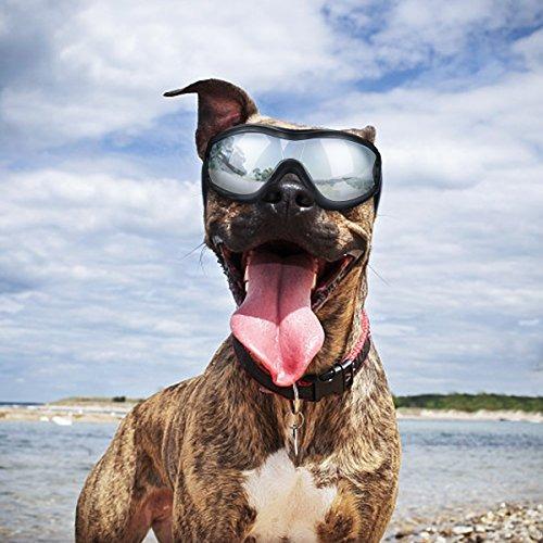 86c1c62259 K Y L Gafas De Sol Para Perro Gafas De Sol Para Perro Gafas ...