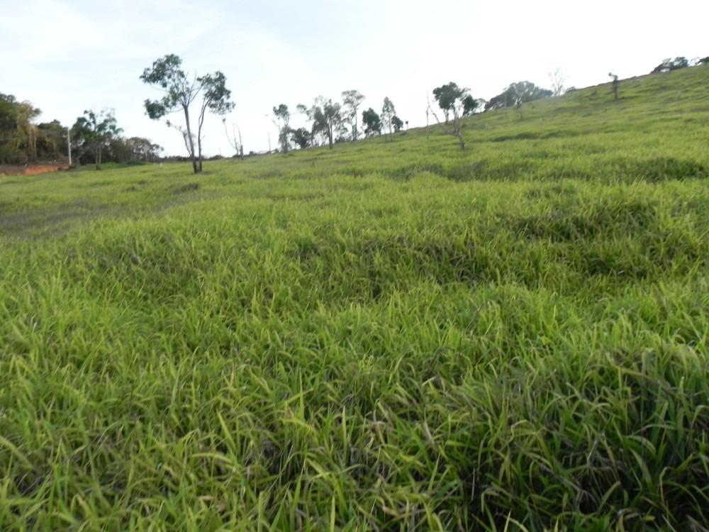 (k.a) 1.000m² em terra preta - direto com o proprietario