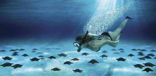 kame tours (tours de snorkel)
