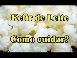 kefir de leite + manual de cuidados envio para todo brasil