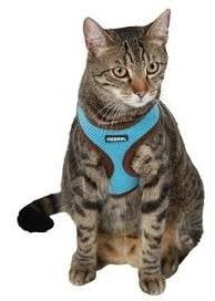 kerbl® arnés alemán para gatos + trailla / coop. pharmavet