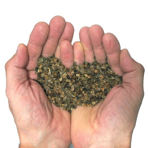 kinesis safarisack 4.2 (caqui - trigo sarraceno lleno)