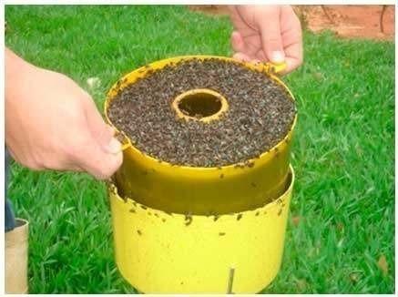 kit 1 armadilha para mosca com 2 refil atrativo 2 litros
