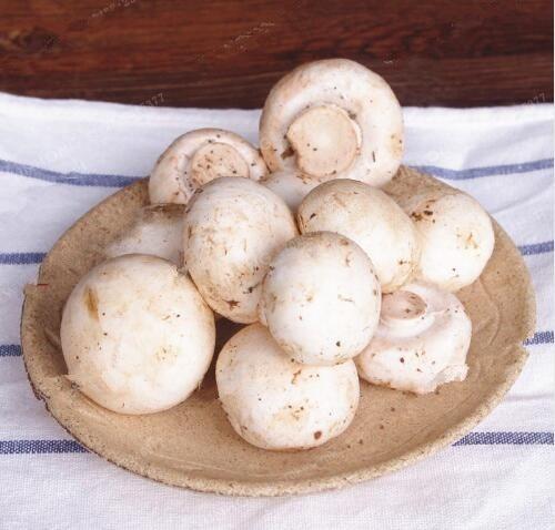 kit 15 sementes hortalicas  cogumelo  para mudas