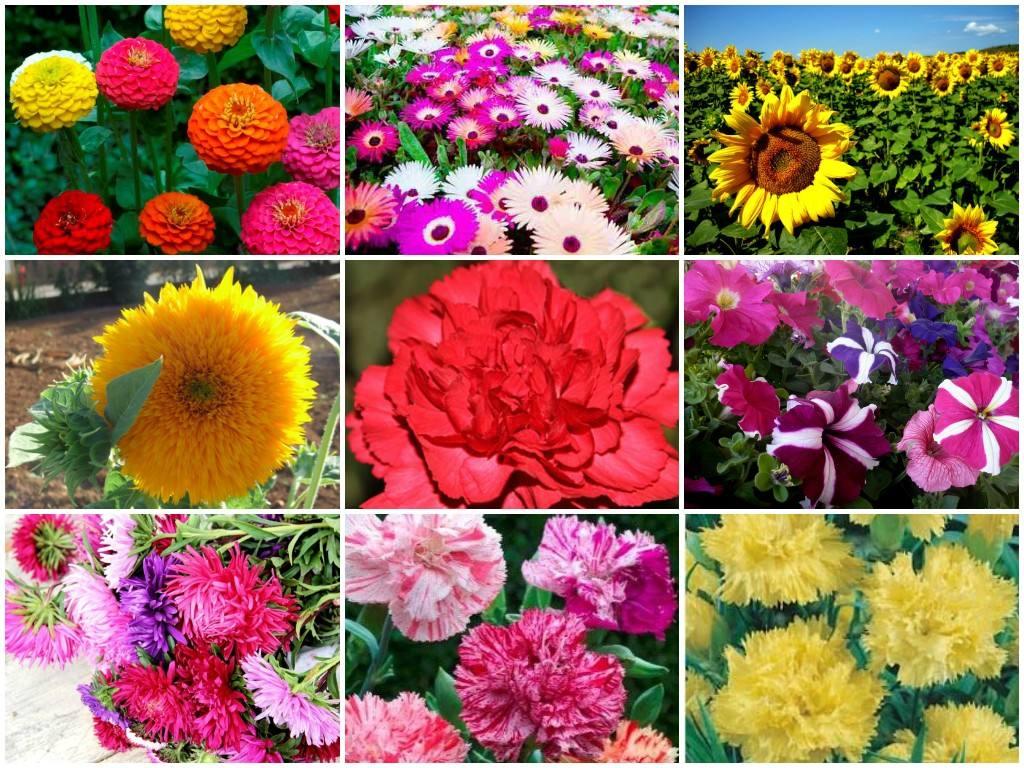 Resultado de imagem para flores diversas cores