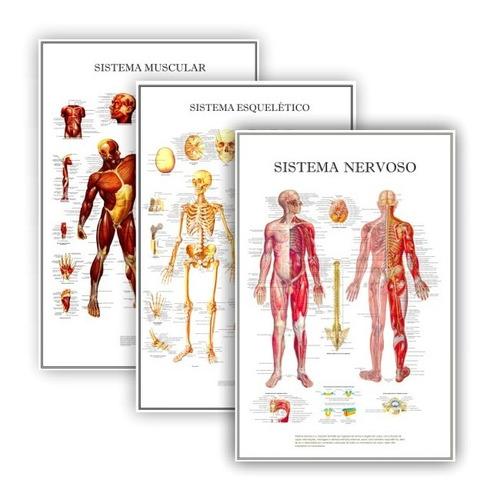 kit 3 posters anatomia humana p/ clínica medicina 60x90 cm