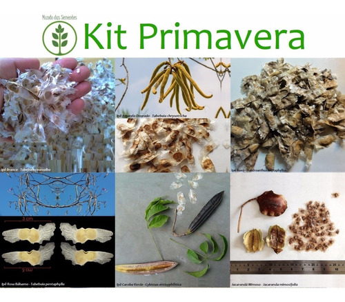 kit 300 sementes - ipê e jacarandá - 6 cores + frete grátis