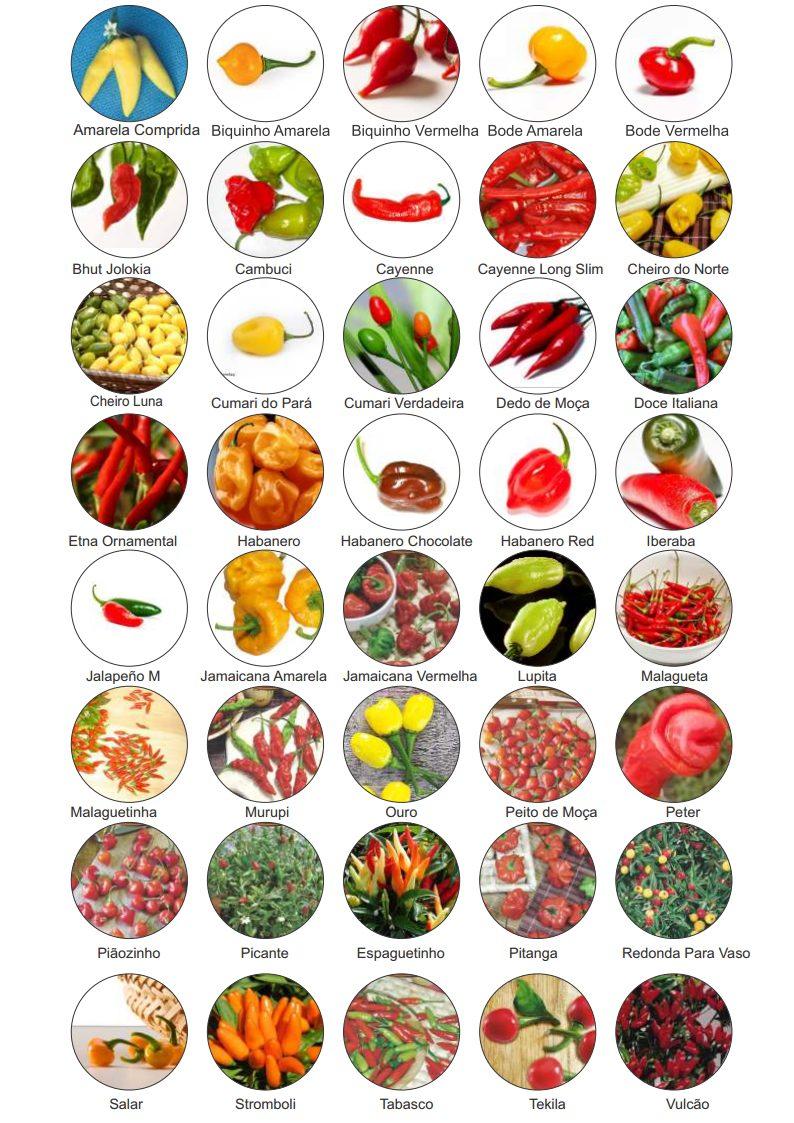 Kit 40 Variedades Sementes De Pimenta Especiais Raras - R ...