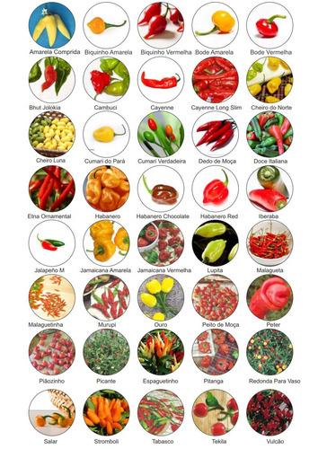 kit 40 variedades sementes pimenta especiais raras fr grátis