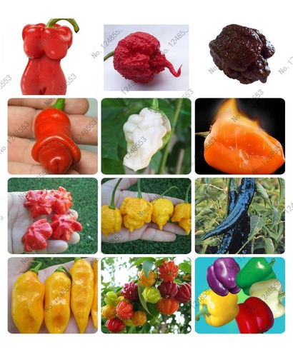 kit 50 sementes variedades de pimenta exotica raras p mudas
