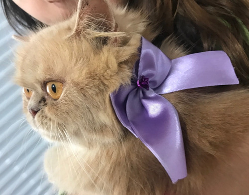 kit 500 pet shop: laços, gravatas, laços pescoço + brinde