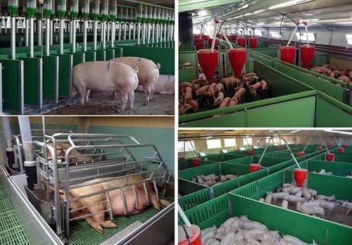 kit aprende cría y engorde de cerdos. planos e instalaciones