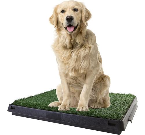 kit bandeja alfombra sanitaria perro baño grande 50x64x6,5cm