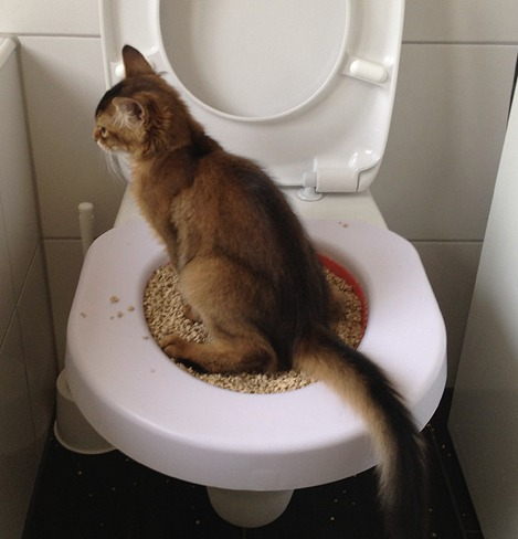 Gato En El Baño   Kit Bano De Entrenamiento Para Gato Sin Arena Mascotas Arch