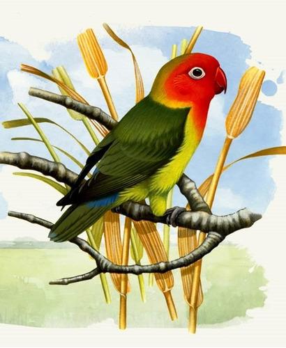 kit c/ 2 papa p/ filhotes de papagaio arara cocota calopsita