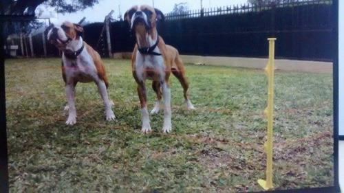 kit cerca elétrica para animais cães gatos cachorros etc...