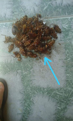kit com 2 inseticida organico 100% natural mata mosca  500ml