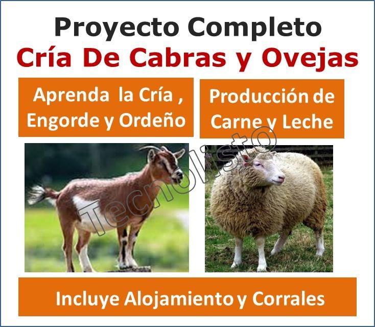 Kit Cría De Cabras Y Ovejas. Producción De Carne Y Leche - Bs. 1.000 ...